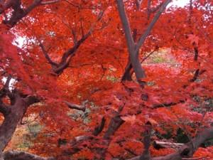 人体科学会2014京都CIMG1255